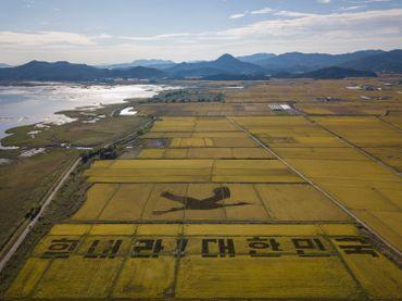 Vue aérienne des rizières