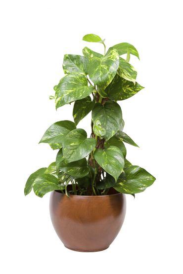 15 plantes d polluantes faciles entretenir - Plantes d interieur faciles d entretien ...