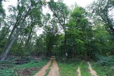 Forêt à Etalle, en province de Luxembourg, en septembre 2018