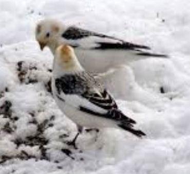 oiseaux au sol