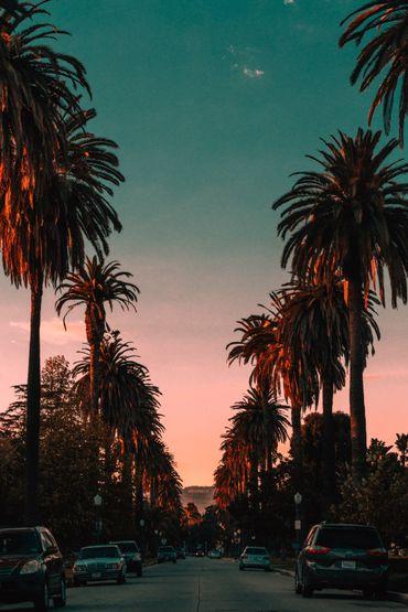 Que serait Los Angeles sans ses immenses palmiers ? Sans doute moins polluée, selon cette récente étude.