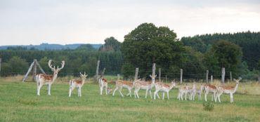 Anima'Sphair est installée au coeur de la campagne, entourée de daims, de chèvres, de canards, de poules.