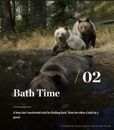 Au coeur de la vie des ours.