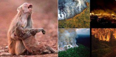L'image d'un singe enlaçant un bébé, apparemment mort brûlé, a été l'une des plus virales