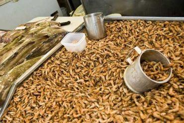 Les fameuses crevettes ostendaises !