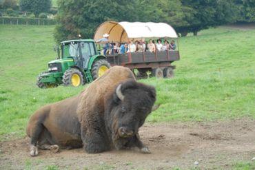 Programme de la visite guidée en chariot: le village indien, la mine d'or, les geysers et nos fameux bisons américains.