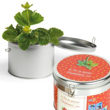 Graines de fraisiers en boite métal Radis et Capucine