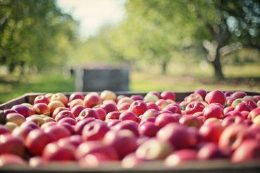 A déguster : Cidre et autres douceurs sucrées/salées d'Havelange