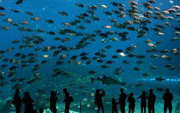 Des vitres : le plus grand aquarium du monde