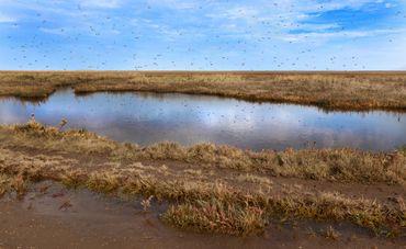 Les moustiques prolifèrent près des marais