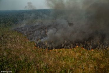 Images, causes, effets, ampleur réelle,...: démêlez le vrai du faux sur les incendies en Amazonie