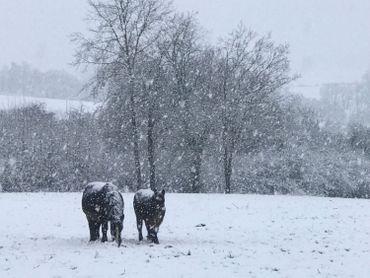 Des chutes de neige sont signalées ce vendredi après-midi sur le centre, le sud et l'est du pays.