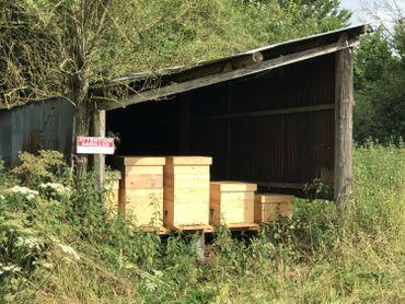 La production de miel, c'est une façon de rentabiliser la culture de fleurs.