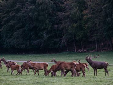 Le  Parc animalier accueille les espèces européennes qui vivent ou vivaient dans nos régions.