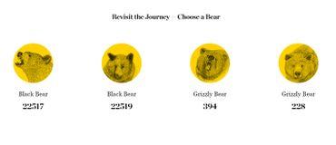 4 caméras permettent de suivre les péripéties de 2 ours et 2 grizzlys. En bas de chaque ursidé : le nombre d'internautes ayant vécu le récit avec tel ou tel ours.
