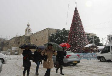 Sapin sous la neige, à Bethléem