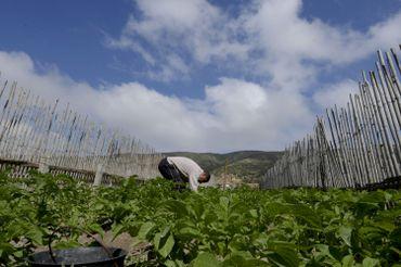 Tunisie: pour contrer la pénurie d'eau, des agriculteurs misent sur un système unique et ingénieux de culture sur sable
