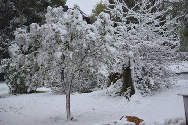 C'est un paysage hivernal qui est offert aux belges ce 4 mai