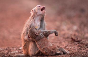 Cette photo a été prise par le photographe indien Avinash Lodhi à Jabalpur