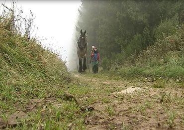 """Une vraie aventure """"nature"""" : du débardage en forêt avec un cheval de trait"""