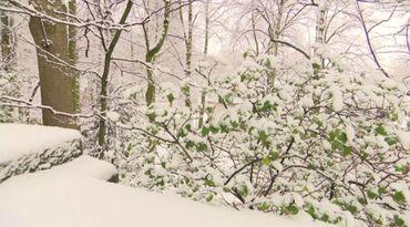 Une partie du parc autour de l'Abbaye de la Cambre sous la neige à Ixelles