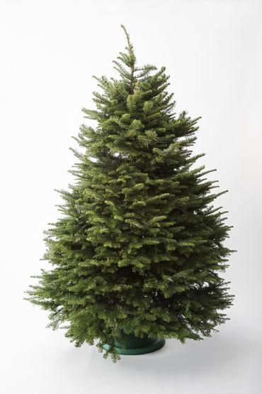 Sapin de Noël : naturel ou artificiel ?