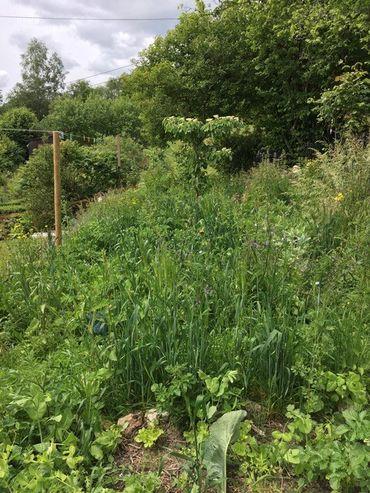 Comment accueillir la vie sauvage au jardin via des aménagements spécifiques?