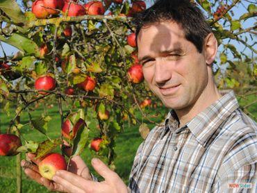 Production du jus et du cidre à partir de pommes issues de vergers d'anciennes variétés hautes tiges