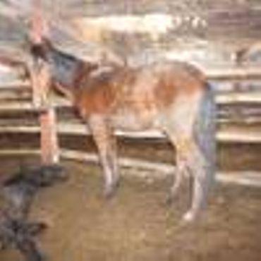Septante chevaux négligés et des autorités locales désemparées à Aywaille