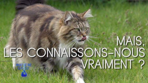 Matière Grise Doc : La vie secrète des chats