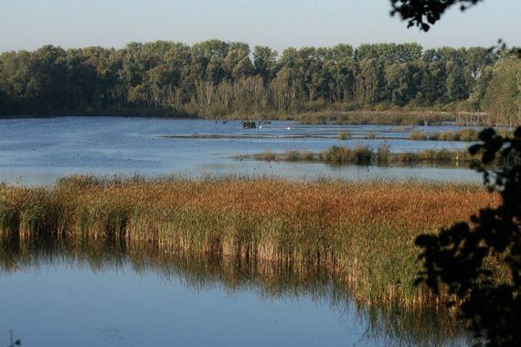 Situé au cœur de la vallée de la Lys, la Réserve Naturelle et Ornithologique, un site remarquable de 120 hectares est un régal pour les amateurs d'oiseaux.
