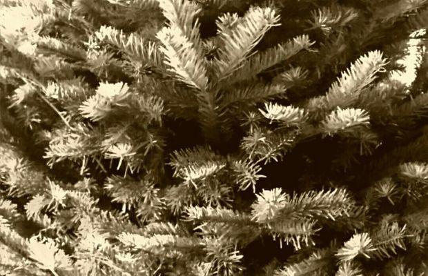 Noël en temps de guerre  - Tous droits réservés ©