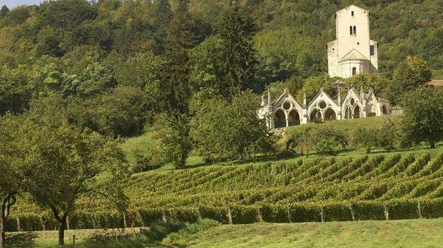 Un vignoble à taille humaine où l'on produit notamment les gris de Toul obtenus par pressage immédiat des cépages Gamay et Pinot noir.