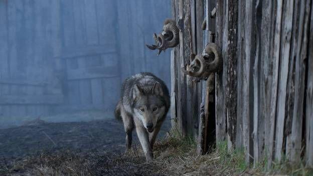 Vivre avec les loups