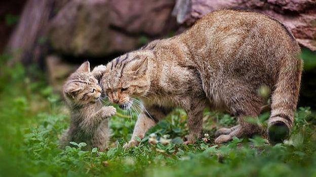 Le chat sauvage rtbf le jardin extraordinaire for Alexandre jardin le petit sauvage