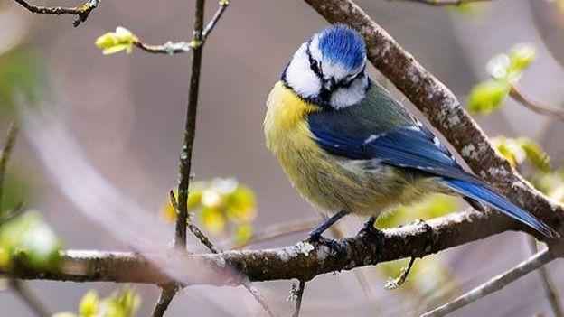 Les oiseaux de nos plaines après le retour des migrateurs