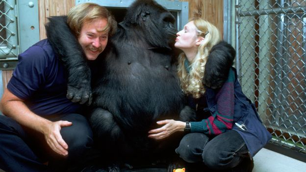 La fascinante histoire de Koko le gorille