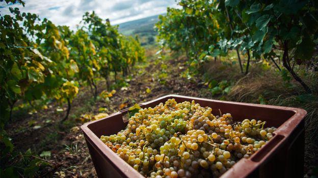 La Lorraine fleure bon le vin et la mirabelle ! Crédit photo www.tourisme-lorraine.fr