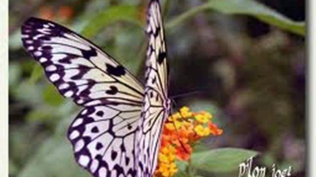 des centaines de quotpapillons en libert233quot rtbf le jardin