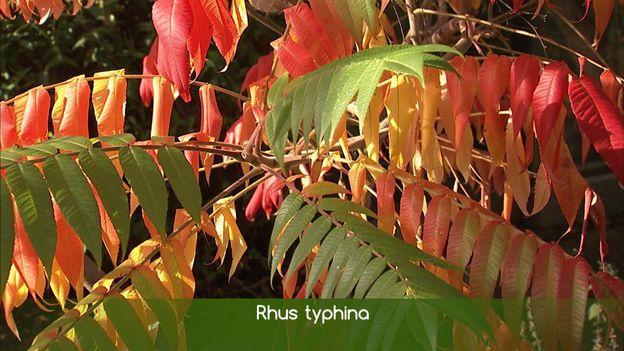 De superbes colorations d'automne