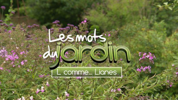Les mots du jardin : L comme... Lianes