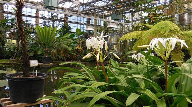 Un titan sous serre gand rtbf jardins loisirs for Bd du jardin botanique 50 bruxelles