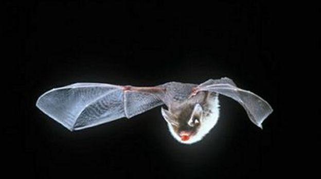 Découvrez les secrets de ces petits mammifères volants