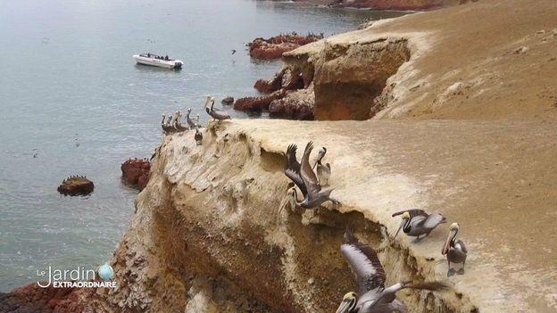 les iles Ballestas, lieux de repos pour les cormorans et goélands,