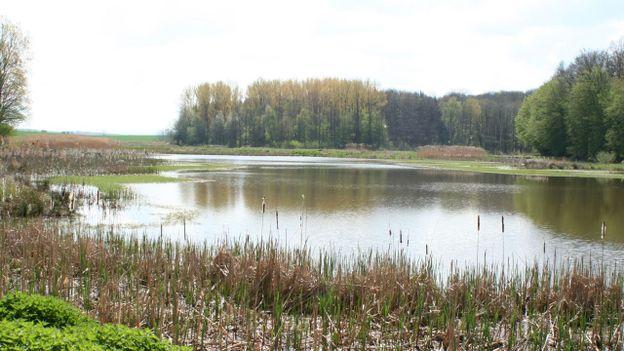 Découvrez la biodiversité de l'étang