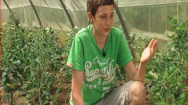 Charles s'occupe des plants de tomates