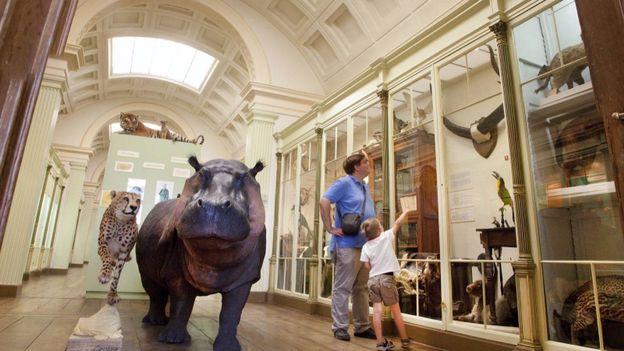 le Musée d'histoire naturelle est un véritable cabinet de curiosité.