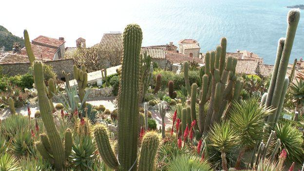 Le Jardin exotique d\'Èze, un paradis terrestre surplombant la ...