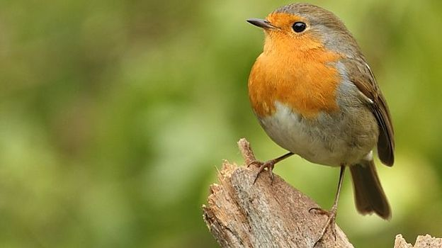 Nos oreilles en éveil pour inventorier les oiseaux du crépuscule...