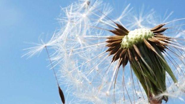 Tous allergiques ? – Inédit coproduit par la RTBF